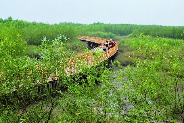 One Day Chongming island tour with Xisha wetland